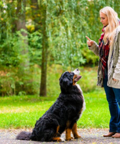 Dog Training Diploma Course