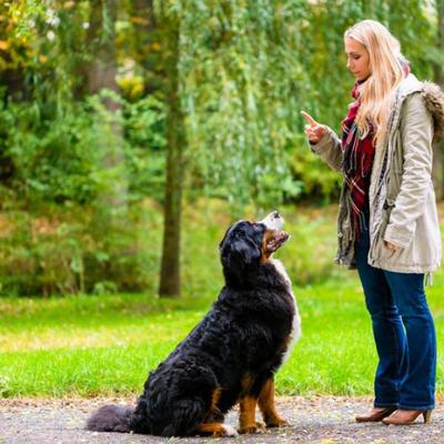 Dog Training Diploma Course