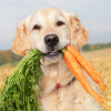 Pet Nutrition Level 4 Advanced Diploma Course