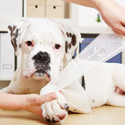 Pet First Aid and CPR Course